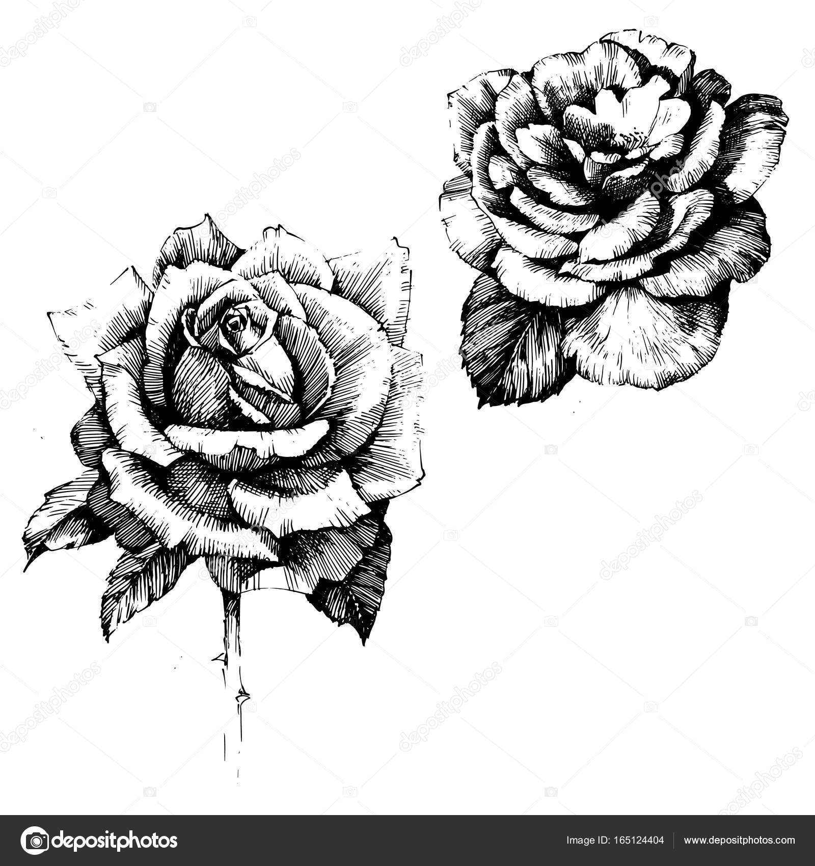 Dessin fleurs rose ink image vectorielle acantstudio - Dessin fleur rose ...