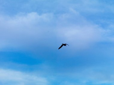 Seagull flying on istanbul sky