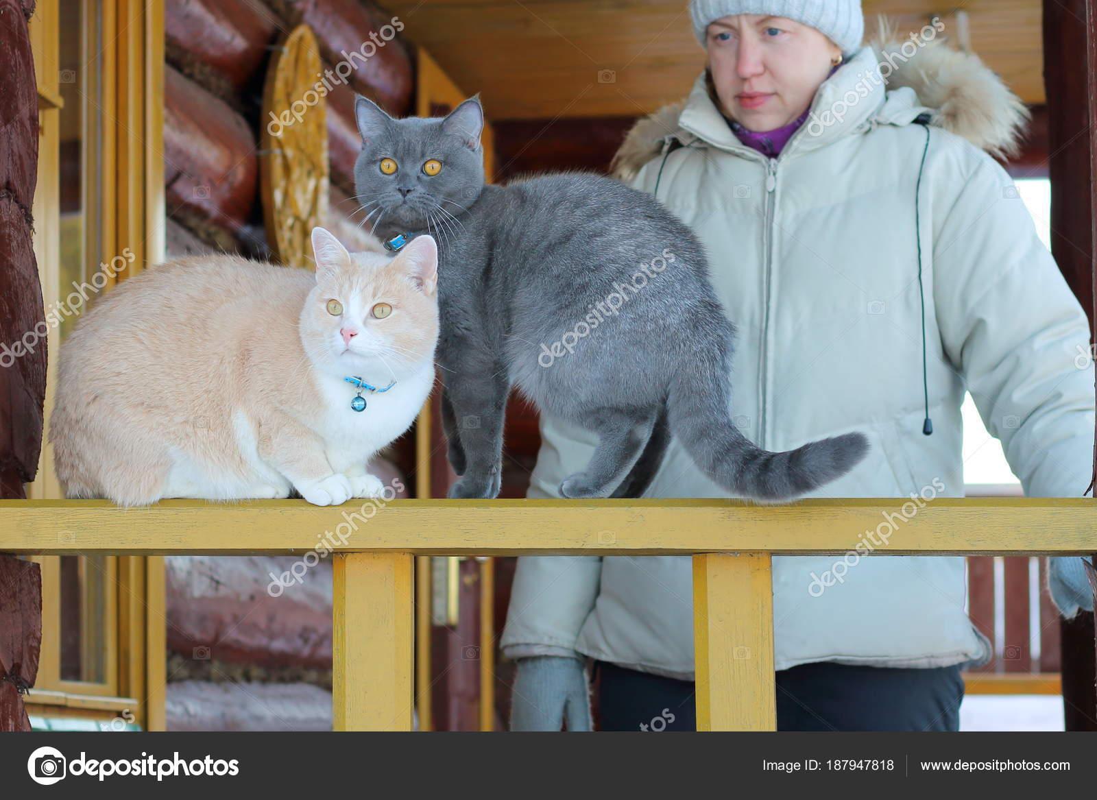 d9461bec5d87 Κόκκινο και γκρι γάτες στη βεράντα του ένα ξύλινο σπίτι με την  οικοδέσποινα– εικόνα αρχείου