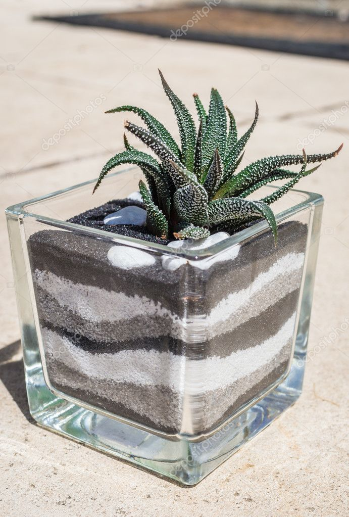Peque o cactus en maceta de vidrio fotos de stock - Comprar tarros de cristal pequenos ...