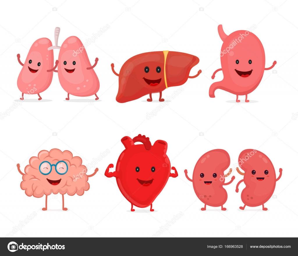 Lindo sonriendo feliz humano órganos fuertes sanos conjunto — Vector ...