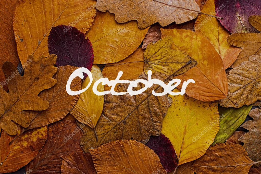 Autumn Leaves Colorful Background. October Concept Wallpaper.– stock image
