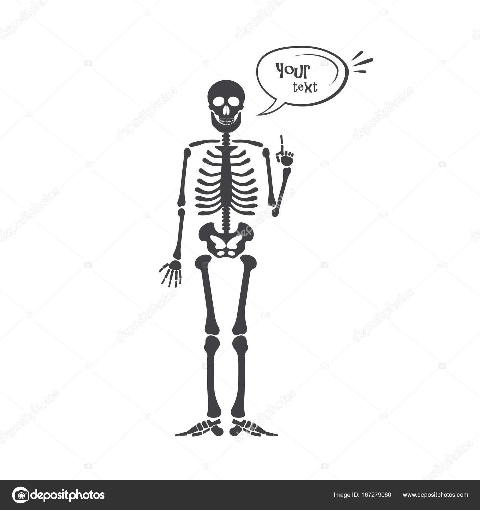 Skelett Anatomie des Menschen. Vektor Halloween schwarz Skelett ...