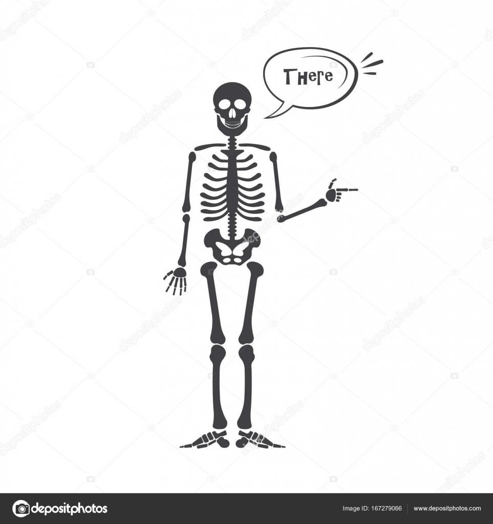 Skelet van de menselijke anatomie. Vector halloween zwart skelet ...