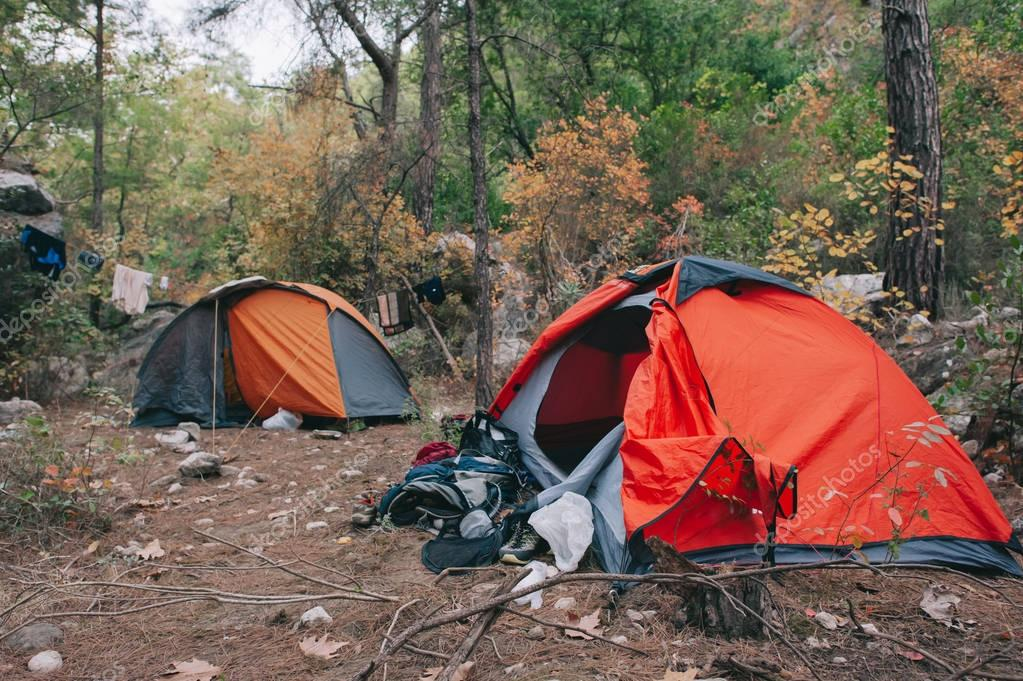 Camping tents in  pine forest