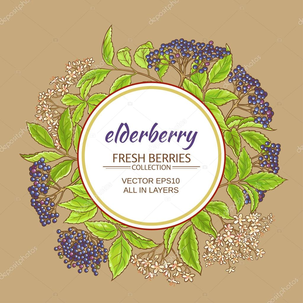 elderberry vector frame
