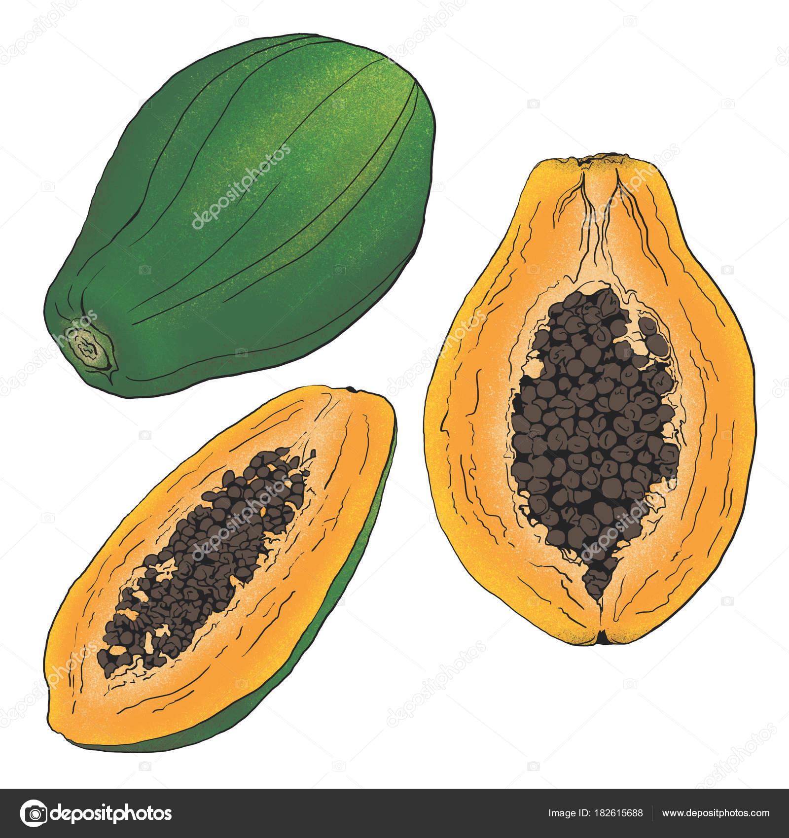 Abbildung Papaya Früchte Farben — Stockfoto © timosvika #182615688