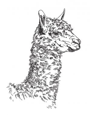 Lama vector hand drawing Illustration