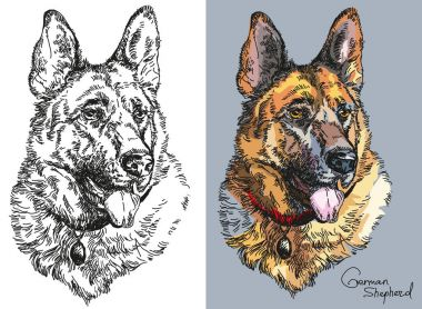 Vector German shepherd in color and black and white