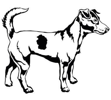 Decorative standing portrait of Dog Jack Russell terrier vector