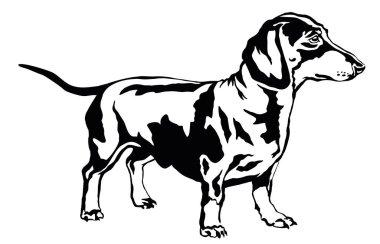 Decorative standing portrait of dog dachshund, vector illustrati