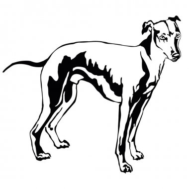 Decorative standing portrait of dog Whippet, vector illustration