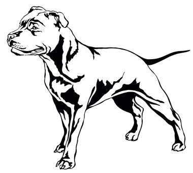 Decorative standing portrait of dog Staffordshire Bull Terrier v