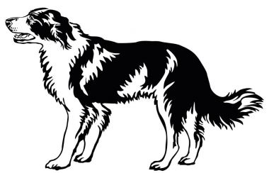 Decorative standing portrait of dog border collie, vector illust