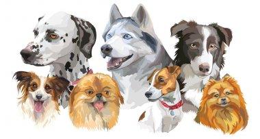 Different dog breeds set