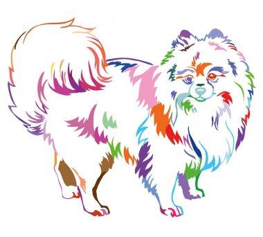 Decorative standing portrait of Dog Pomeranian (Spitz) vector il