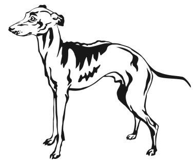 Decorative standing portrait of Italian Greyhound vector illustr