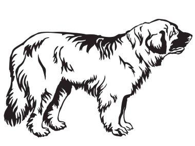 Decorative standing portrait of dog Leonberger vector illustrati
