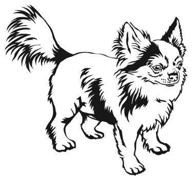 Decorative standing portrait of dog long-haired Chihuahua vector