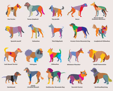Vector set of colorful mosaic dogs silhouettes-4