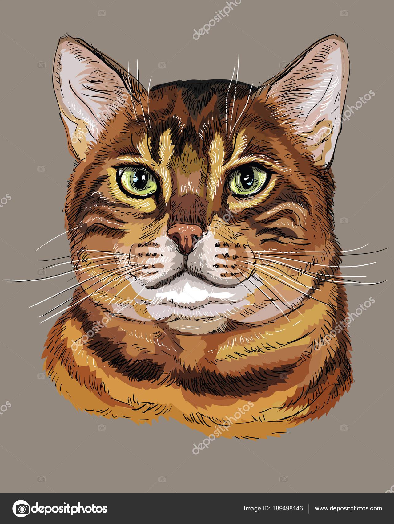 Bunte Bengal Katze Stockvektor Alinart 189498146