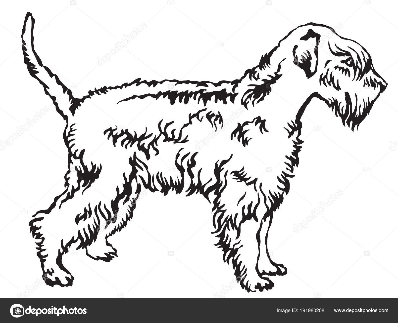 Decorative standing portrait of Soft-coated Wheaten Terrier vect ...