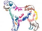 Fotografie Bunte dekorative ständigen Porträt von Pumi Hund Vektor Fittings