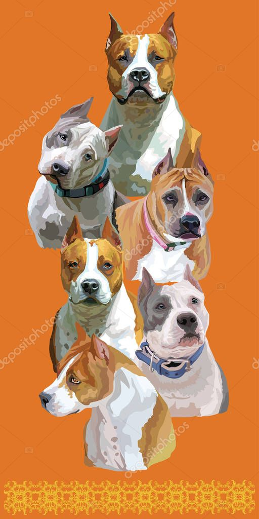 Vertical Postcard With American Staffordshire Terriers Colorful Vector Realistic Illustration Of American Staffordshire Terrier Pitbull Dog Portraits Isolated On Orange Background Art For Designe Banner And Cards Premium Vector In Adobe Illustrator
