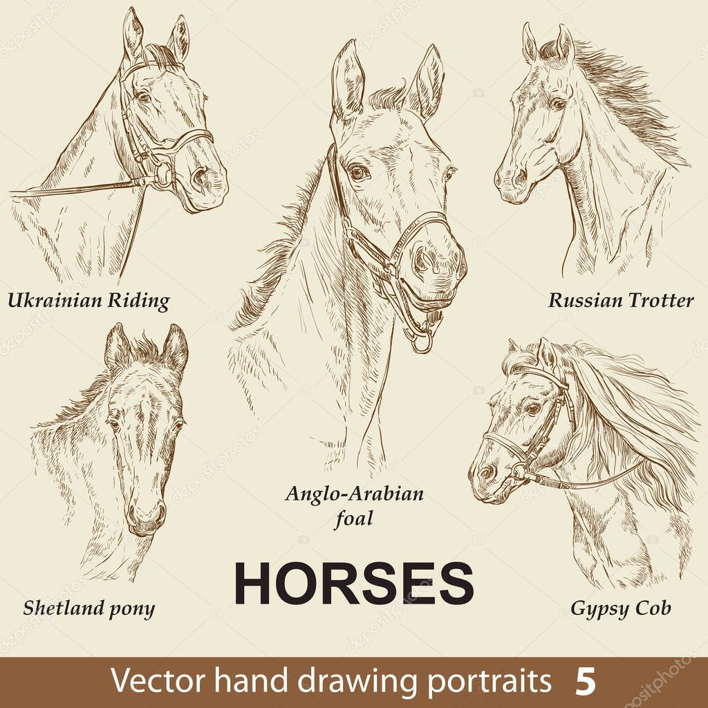Hand Drawing Set Of Horses Breeds Elegance Horse Head Isolated On Beige Background Pencil Ink Hand Drawn Realistic Portrait Animal Collection Good For Print T Shirt Banner Stock Illustration Premium Vector In