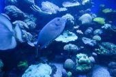 Barevné exotické tropické ryby pod vodou v akváriu