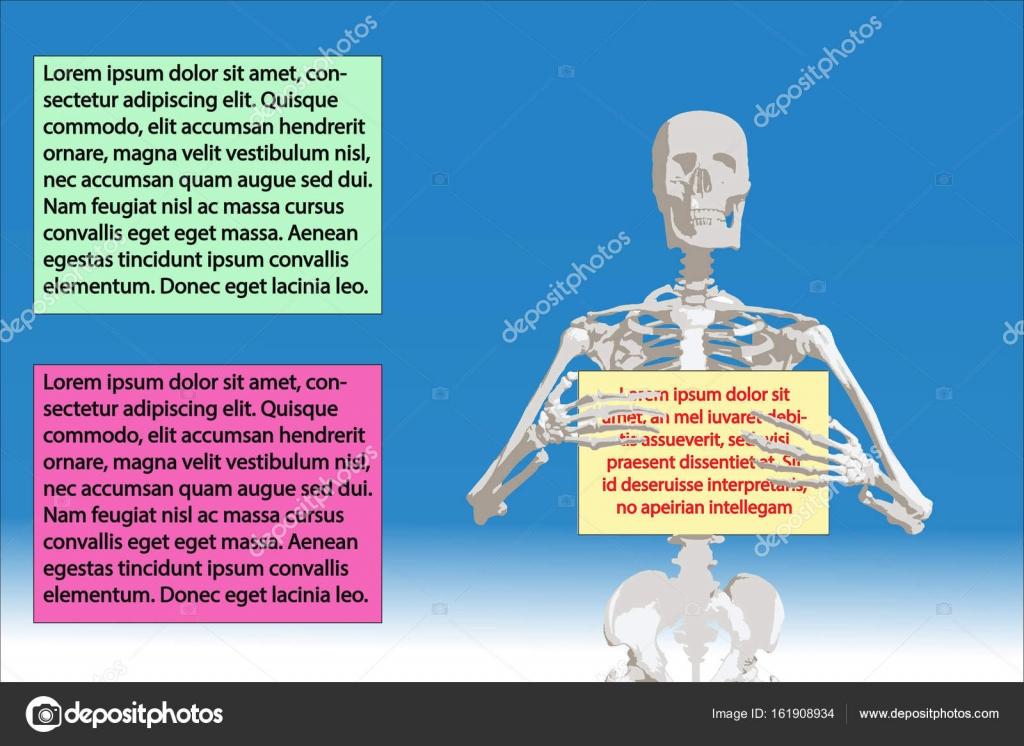 Medicina esqueleto humano huesos del cráneo — Vector de stock ...
