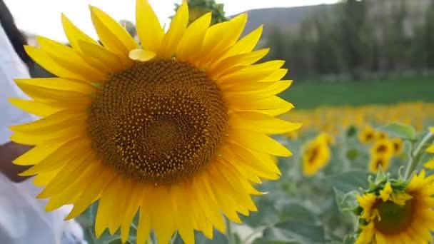 krásná žena ve slunečnicovém poli