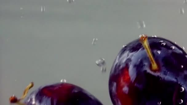 Blue Plum Drops Under Water on White Background