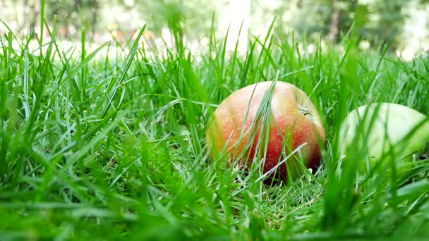 Red And Green Ripe Juicy Apples Roll on the Green Grass