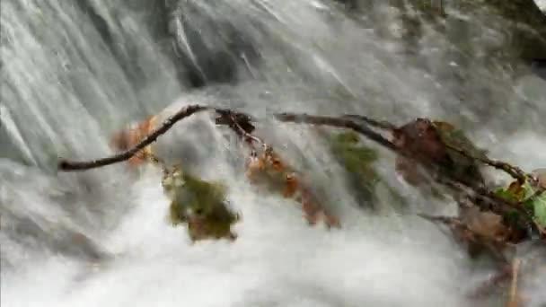 Potůček v lese s dubem větev ve vodě