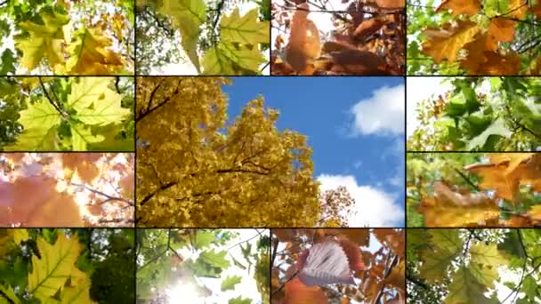 Montage Composition Collage On Colorful Golden Autumn Leaves