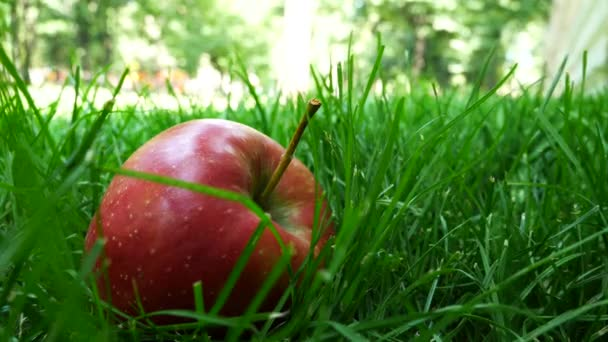 Red Ripe Juicy Apples Falling on Green Grass