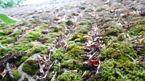 Green Moss On Roof Buildings