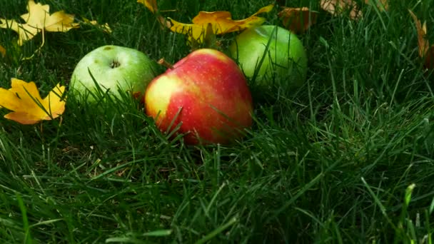 Red Ripe Juicy Apples on Green Grass