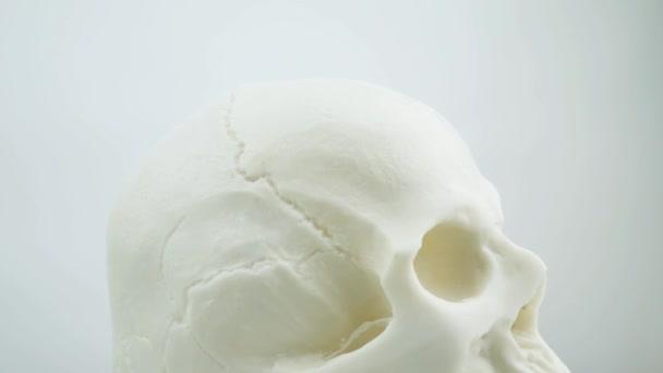 lidská lebka izolovaných na bílém