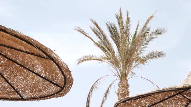 Sun umbrellas and palm on beach