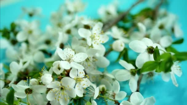 Jarní pozadí s bílými květy a čerstvé zelené listy