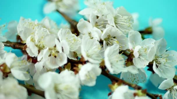 jarní pozadí s bílými květy