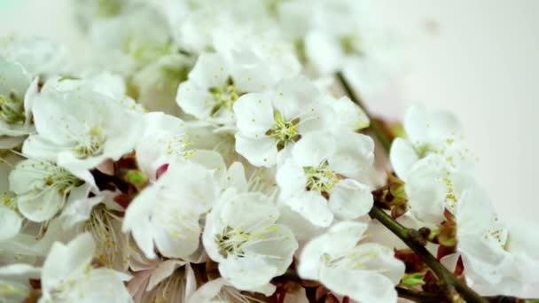 Jarní Kytka na pozadí pinc se větev stromu květ