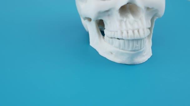 Lidská lebka izolované na zeleném povrchu