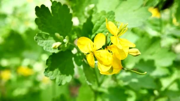 žlutý květ na zeleném pozadí
