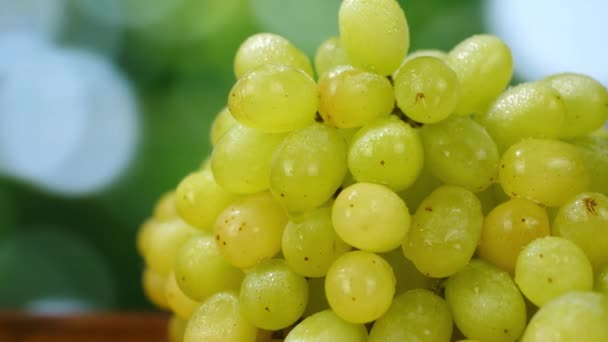 Organikus érett fehér szőlő sárga zöld kert háttér