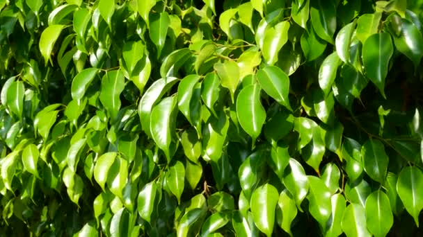 Green leaves nature background
