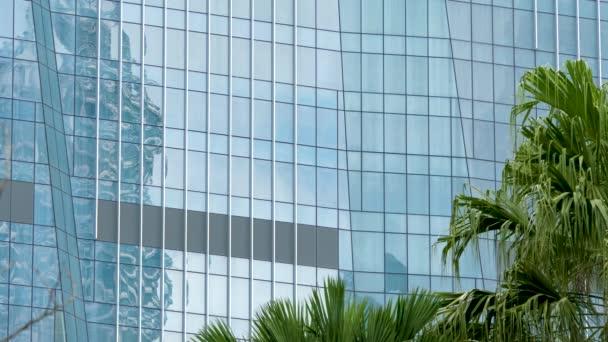 Čisté skleněné stěny s palmami pozadí