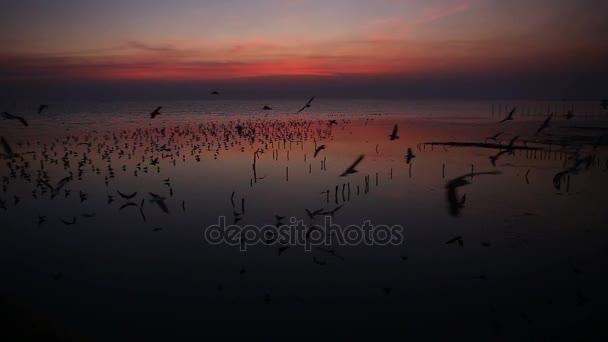 Möwe und romantischer Sonnenuntergang im thailändischen Abendlicht, Zugvögel